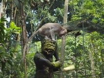 Estatua de dios del mono con en su cabeza un macaque que intenta recuperar una espiga de trigo foto de archivo