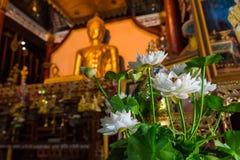 Estatua de oro de Buda en iglesia en el templo de Rongngae en Nan Provinc Fotografía de archivo libre de regalías