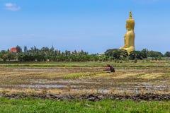 Estatua de oro grande de Buda que se sienta con el granjero del primero plano que trabaja en campo del arroz Foto de archivo