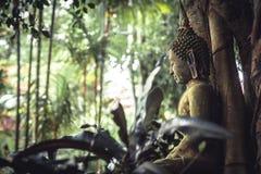 Estatua de piedra cubierta de musgo de Buda que se sienta en jardín tropical enorme entre follaje tropical enorme en bosque tropi Fotografía de archivo