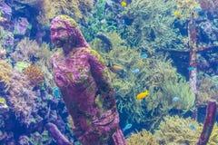 Estatua de piedra de la sirena que erosiona bajo el agua, decoración del acuario, fondo de la vida marina imagen de archivo libre de regalías