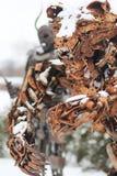 Estatua de un oso asustadizo del metal Fotos de archivo