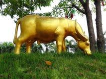 Estatua del búfalo que come la hierba Foto de archivo libre de regalías
