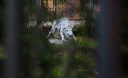 Estatua del jabalí foto de archivo libre de regalías