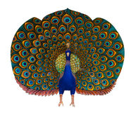 Estatua del pavo real Fotos de archivo
