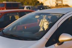 Estatua del perro de la porcelana con un cinturón de seguridad en dentro un coche imágenes de archivo libres de regalías