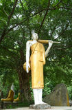 Estatua derecha del budda Imagenes de archivo