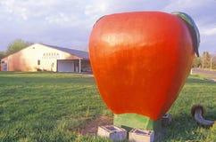 Estatua gigante de un tomate maduro, rojo en el campo, WI Imagen de archivo libre de regalías