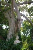 Estatua ocultada en la selva Imagen de archivo