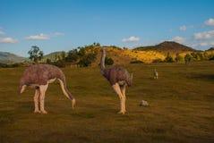 Estatuas de avestruces en el claro Modelos animales prehistóricos, esculturas en el valle del parque nacional en Baconao, Cuba Imágenes de archivo libres de regalías