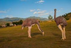 Estatuas de avestruces en el claro Modelos animales prehistóricos, esculturas en el valle del parque nacional en Baconao, Cuba Fotos de archivo
