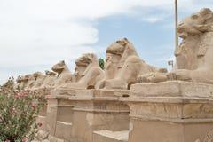 Estatuas de Egipto antiguo de la esfinge en templo del karnak de Luxor fotografía de archivo