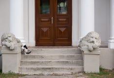 Estatuas de leones y de un gato Fotos de archivo libres de regalías