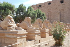 Estatuas de ovejas en Egipto fotografía de archivo
