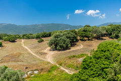 Estatuas prehistóricas en las colinas de Córcega - 5 Fotos de archivo libres de regalías
