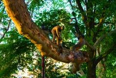 Estatueta do ferro fundido de um homem com uma serra que reduz um ramo foto de stock royalty free