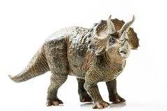 Estatueta plástica do Triceratops no fundo branco fotografia de stock