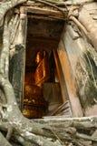Estatuto de Buda Fotos de archivo