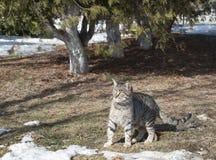 Este gato cinzento do tigrine está jogando sob as árvores foto de stock royalty free