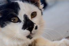 Este gato es uno de los mejores animales domésticos que usted ha visto nunca Foto de archivo libre de regalías