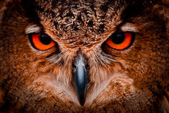 Ojos viejos sabios del búho