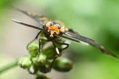 Este insecto de la mariposa, pelo amarillo, cuerpo negro y dos antenas en la cabeza imagen de archivo