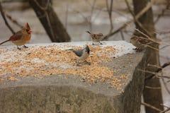 Este lugar é para os pássaros Fotografia de Stock