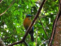 este pássaro é original na selva em Colômbia Paradise imagens de stock