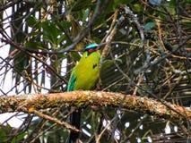 este pássaro é um homem que o seu é stroger e muito mau imagem de stock royalty free