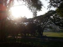 Este relógio de Lergarden o nascer do sol sob a árvore do parque imagens de stock royalty free