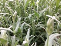 Esteira do plástico da grama verde Imagem de Stock Royalty Free