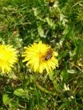 Esteja em uma flor Imagem de Stock
