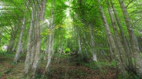 Estensione degli alberi Immagine Stock