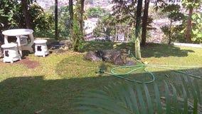 Estensione dell'erba verde nel parco Dettaglio dell'erba verde video d archivio