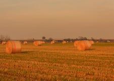 Estensione delle balle cilindriche del fieno in un terreno coltivabile Fotografia Stock