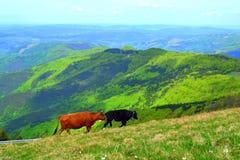 Estensione delle montagne Fotografia Stock Libera da Diritti