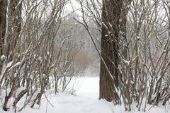 Estensioni innevate del paesaggio di inverno Un parco nell'inverno dentro fotografia stock libera da diritti