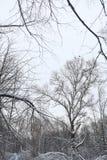Estensioni innevate del paesaggio di inverno Un parco nell'inverno dentro immagine stock