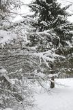 Estensioni innevate del paesaggio di inverno Un parco nell'inverno dentro fotografie stock libere da diritti