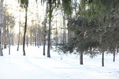 Estensioni innevate del paesaggio di inverno Un parco nell'inverno dentro fotografie stock