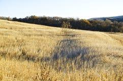 Estepa amarilla con un árbol en el centro contra un bosque en la caída con una sombra en la hierba fotografía de archivo