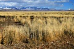 Estepa de Altai Foto de archivo libre de regalías