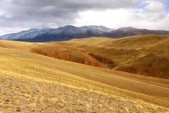 Estepa de Altai del oro Fotos de archivo libres de regalías