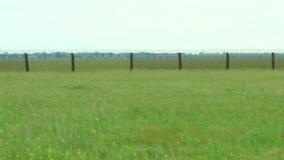 Estepa de la primavera del panorama donde pastando la cebra almacen de video