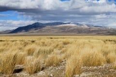 Estepa misteriosa Altai Foto de archivo