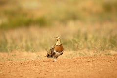 esteparia för en för ave-campoel Royaltyfri Foto