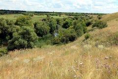 Estepe em Ucrânia Plantas do estepe Borysthenica de Stipa Valesiaca do Festuca Fotografia de Stock Royalty Free