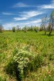 Estepe, pradaria, meseta, savana Fotografia de Stock Royalty Free