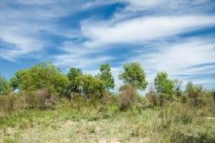 Estepe, pradaria, meseta, savana Fotografia de Stock