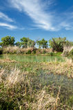 Estepe, pradaria, meseta, savana Foto de Stock Royalty Free
